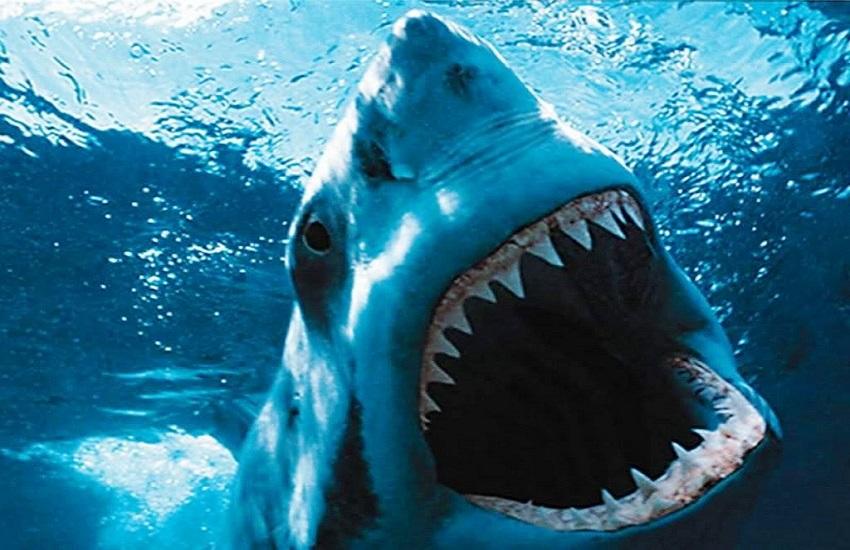 Denti in bocca - Odontonetwork Genova - Service Provider Odontoiatrico