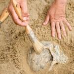 I denti di un feto di 27mila anni fa svelano gli ultimi mesi di vita della mamma - Odontonetwork Genova